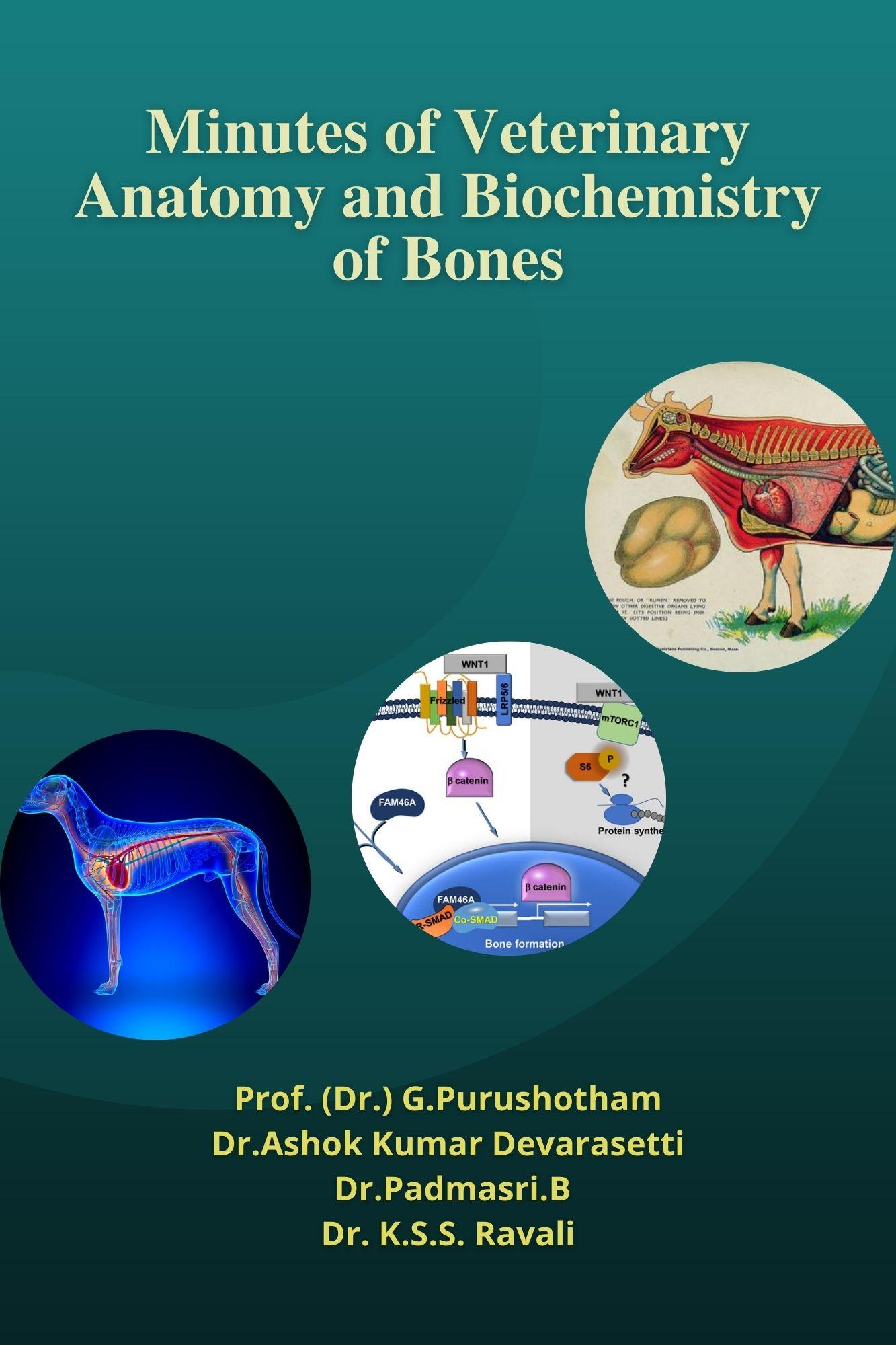 Minutes of Veterinary Anatomy and Biochemistry of Bones